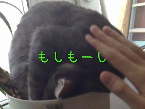 植木鉢で寝る猫00