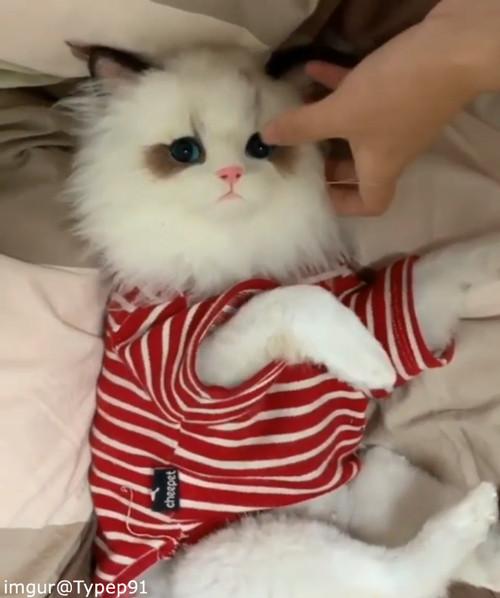 かわいい猫かと思ったら…ちょっとドッキリ02