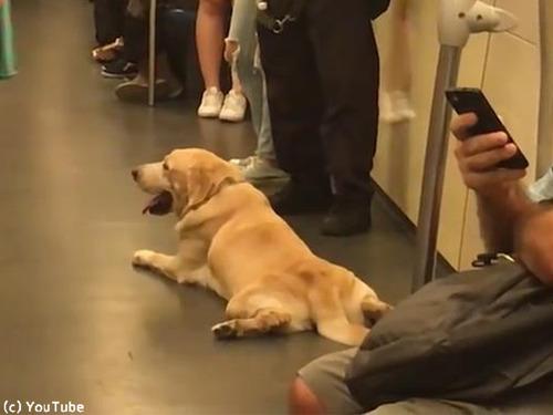 麻薬犬が地下鉄でリラックス00