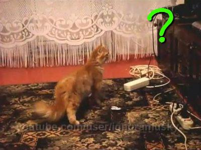 家電に驚く猫