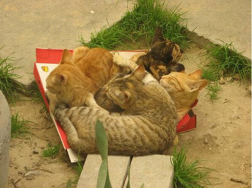 ピザ猫11