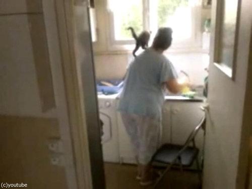 洗い物と子猫05