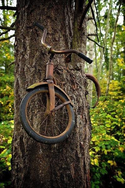 木の生命力05