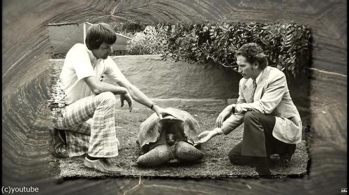 絶滅を救ったガラパゴスの「絶倫」亀が引退03