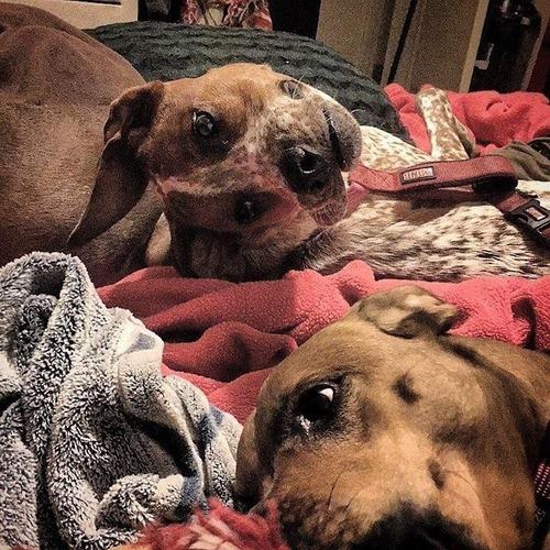 変な顔と話題を呼ぶ犬01
