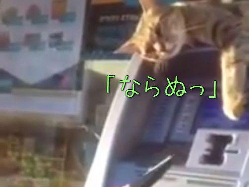 ATMの番猫00