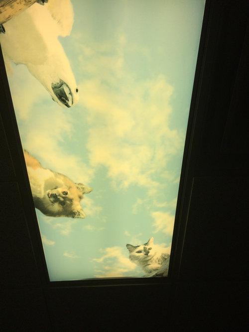 歯医者が天井に工夫04