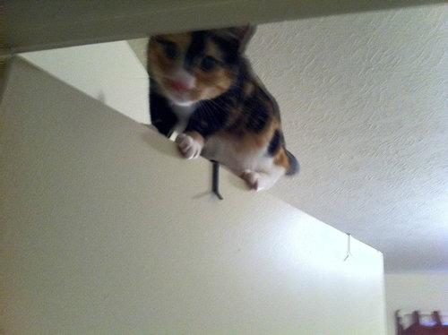 すごい猫10