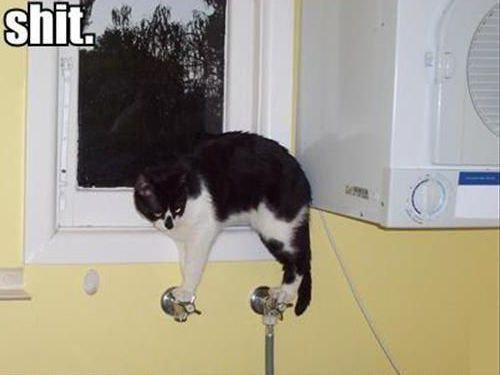 バランス猫00