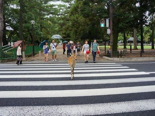 奈良の鹿と外国人04