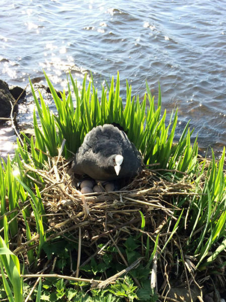 オランダの川辺をゴミ掃除18