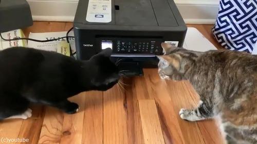 プリンターに興味津々な猫がかわいい02