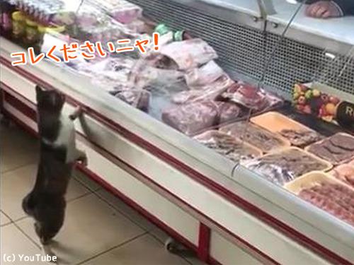 お肉屋さんに現れた猫00