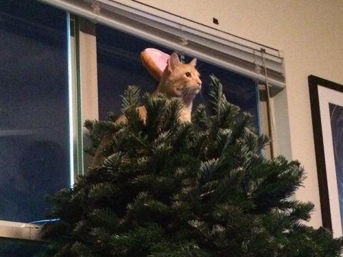 クリスマスツリーを立てた10分後02