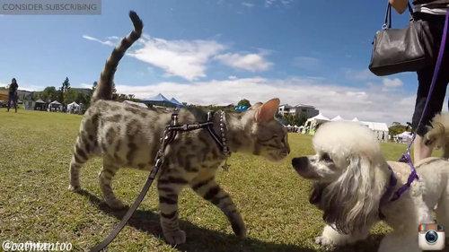 犬好きの猫が50匹と出会う02