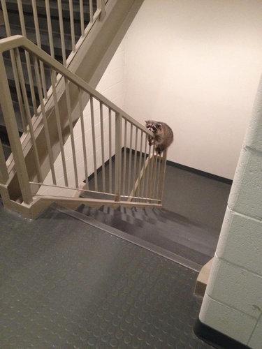 階段で目が離せない01