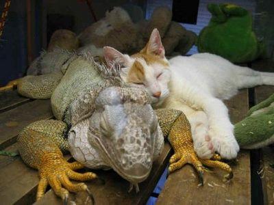 動物枕08