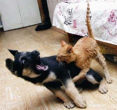 犬と猫の戦い07
