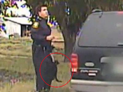 警官にまとわりついて頭の上まで乗ってくる黒猫