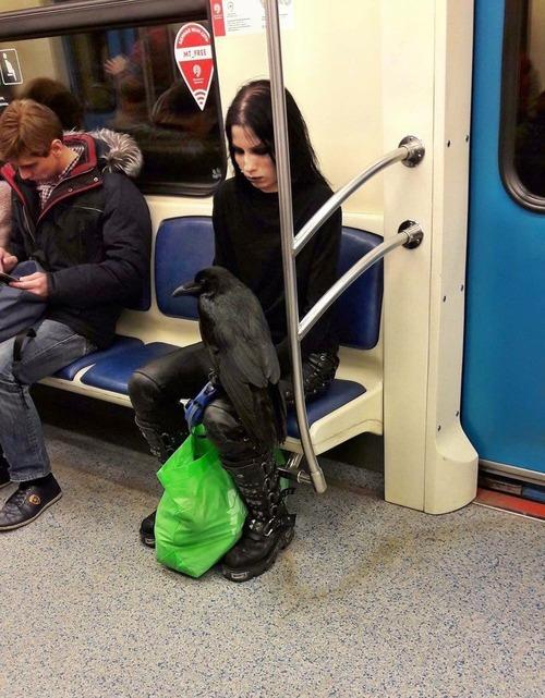 07電車、バス、飛行機での変わった乗客