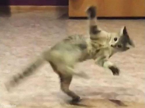 しっぽを追いかけて回転猫03