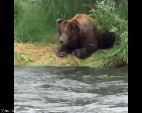 クマの食事01