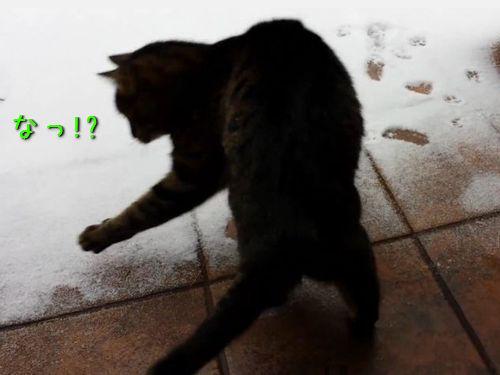 初めて雪に触れた猫00