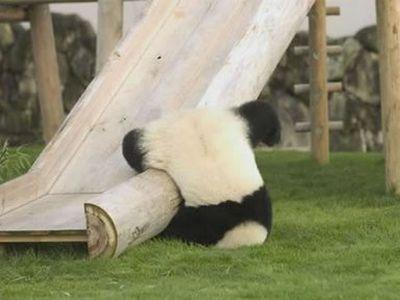 ずっこけパンダ