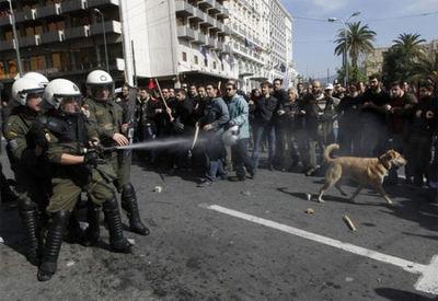 ギリシャの暴動犬09
