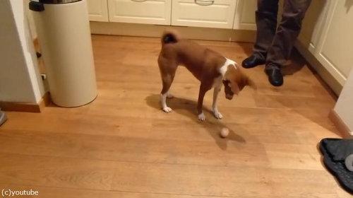 たまごと犬01