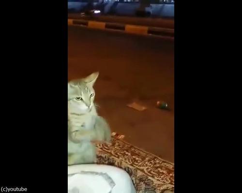 人間になりきる猫02