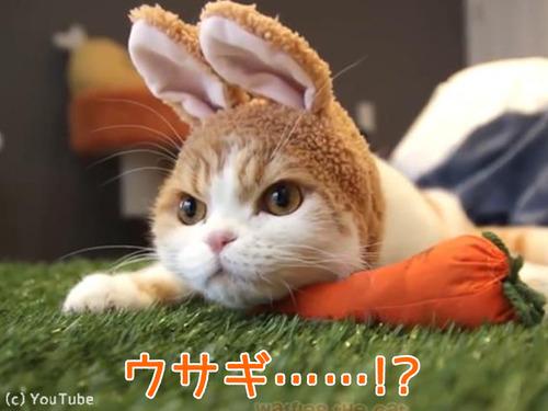 ウサギかと思ったら猫だった00