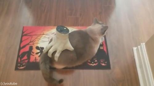 ハロウィンのおもちゃを気にいっちゃった猫01