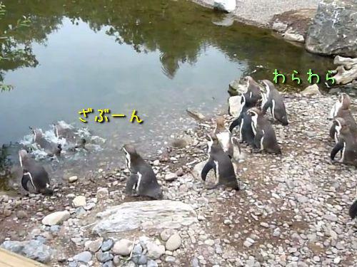 悲しいペンギン