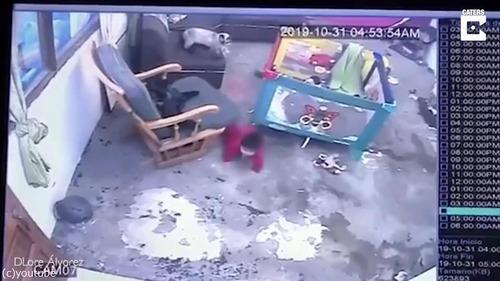シャム猫が人間の赤ちゃんを必死に守る01