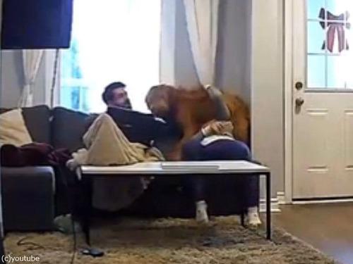 子犬の気持ちの大型犬04