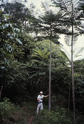 森林の再生02
