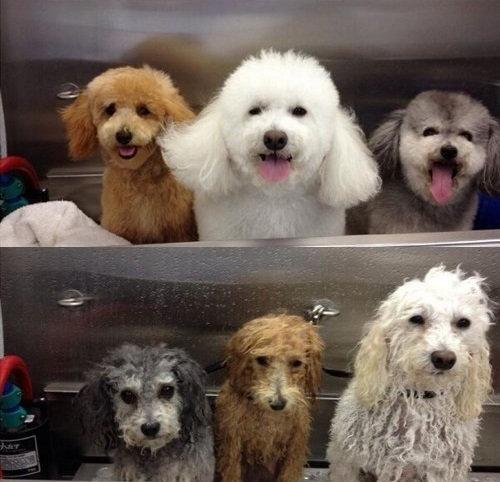 ペット濡れる前と後10