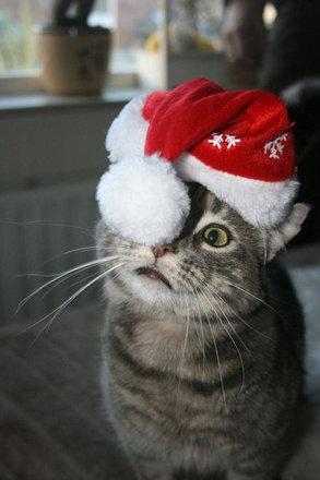 猫をぎゅーっとしたくなる写真15
