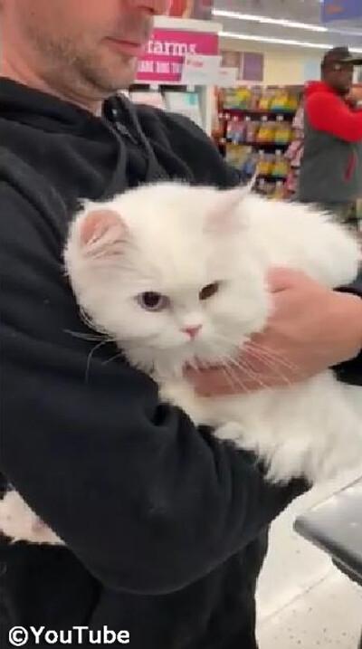 獣医さんを見つけたときの猫の反応01