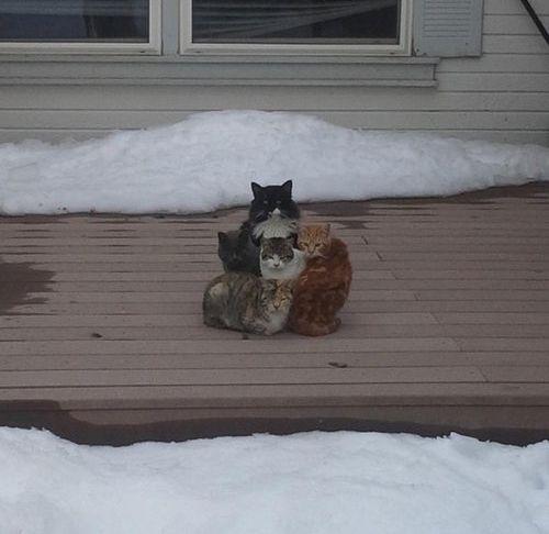 密談する猫たち18