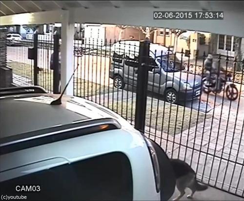 バイク強盗に襲われた女性、とっさの機転01