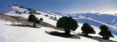 本当は美しいレバノン05