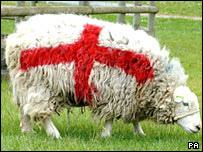 目の覚めるような真っ赤な羊の群れ09