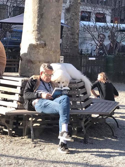 飼い主と読書をする01