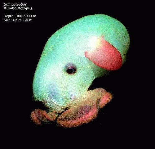 深海の生き物04