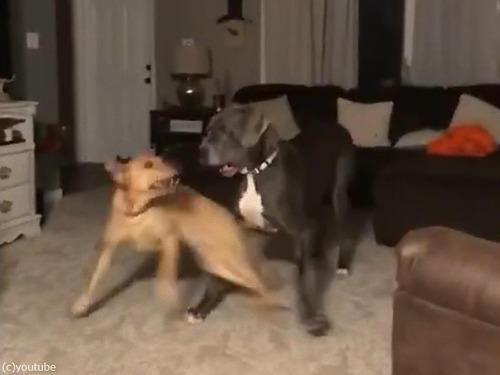 興奮すると高速スピンする犬02