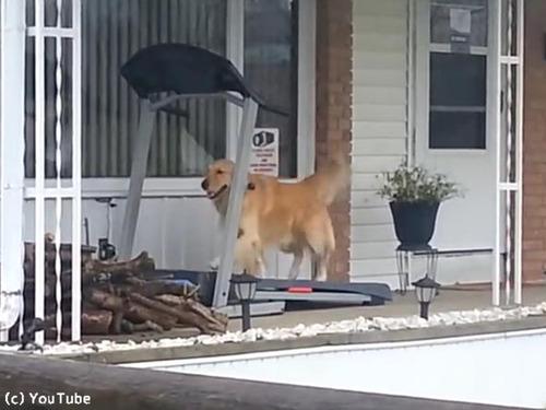 梅雨の時期は自分で散歩するワン00