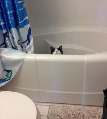 猫は見ている24