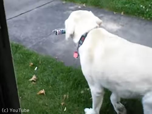 郵便受け取りをしてくれる犬04